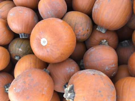 Flower Mound Pumpkin Patch Prepares for Fall