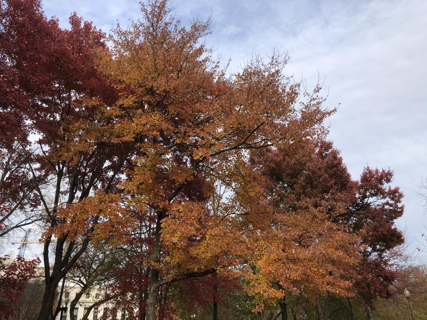 Audiences can find several comparisons between characters in the novel, A Tree Grows in Brooklyn, and trees themselves. (Ashlynn Roberts / The Talon News)