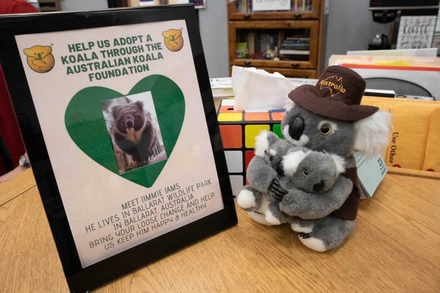 Students can help donate money to the Australian Koala Foundation in order to adopt a koala for one year and help with the environmental crisis in Australia. (Gracie Hurst / The Talon News)