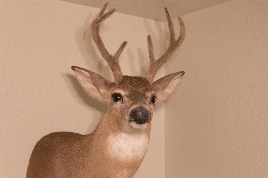 White Tail Deer- Shot By: Shane Olsen  Location: Llano County Texas